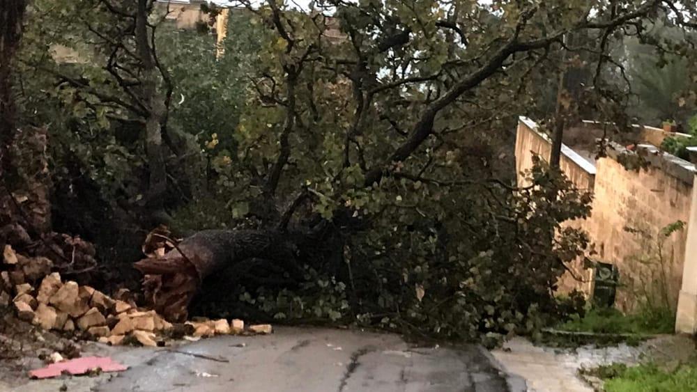 Maltempo: rimossi alberi dai binari e dalle strade, ripristinati ...