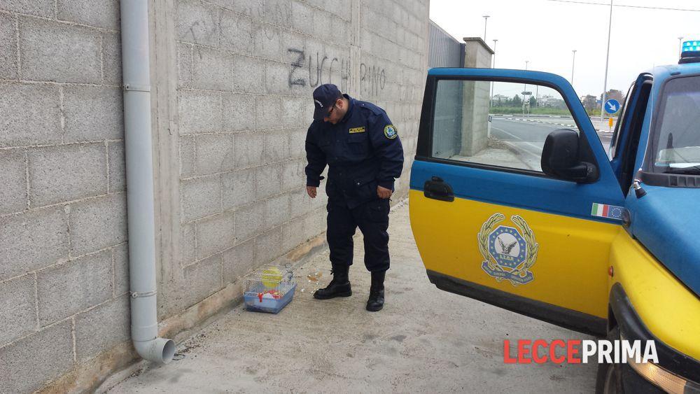 Guardie zoofile trovano una gabbia abbandonata dentro for Criceto morto